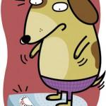 dog pounds - homemakers magazine, canada