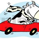 """steer clear"" - natrel milk, canada"